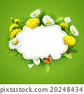 Fresh spring background with grass, dandelions and 20248434