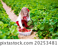 草莓 女孩 少女 20253481