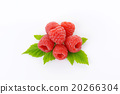 Fresh raspberries 20266304