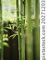 bamboo 20271203