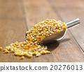 maize corn 20276013