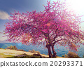 Blossoming tree 20293371