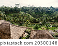 bali, rice, terraces 20300146