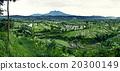 Rice terraces in Bali 20300149