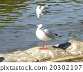 Ulysses that flew to Inagihama Park 20302197