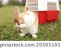 兔子 兔 牧场 20303103