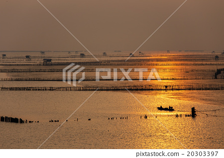 Silhouette of fisherman at oyster farm on sunrise 20303397