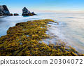 Rocks and seaweed (Sargassum sp.), Thailand. 20304072