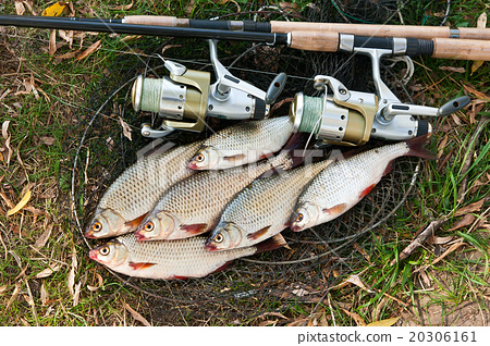 Freshwater fish and fishing rods with reel. 20306161