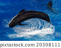 pilot whale jumping outside the sea 20308111