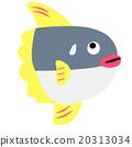 翻车鱼 鱼 海洋生物 20313034