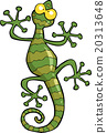 Green gecko lizard 20313648