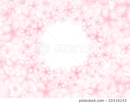櫻花 櫻 賞櫻 20316243