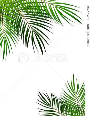 Palm Leaf Vector Background Illustration Stock Illustration 20322481 Pixta Leaves design resources · high quality aesthetic backgrounds and wallpapers, vector illustrations, photos, pngs, mockups, templates and art. https www pixtastock com illustration 20322481