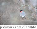 躺下 謊言 小鳥 20328661