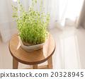 豆芽 水產養殖 自然光 20328945