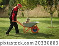 cute little boy sitting in wheelbarrow 20330883