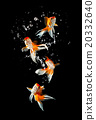 Goldfishs jumps 20332640