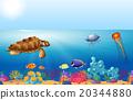海 海洋 游泳 20344880