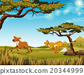 Tiger chasing a deer in the field 20344999