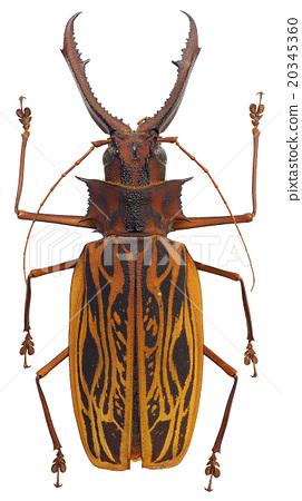 곤충, 벌레 20345360