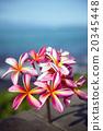 花朵 花 花卉 20345448