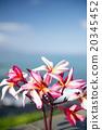 花朵 花 花卉 20345452