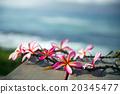 花朵 花卉 花 20345477