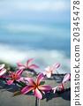 花朵 花 花卉 20345478