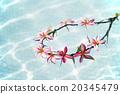 花朵 花 花卉 20345479