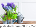 Gardening tools and flowers 20365752