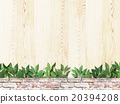 背景 自然 植物 20394208