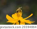 花朵 花卉 花瓣 20394864