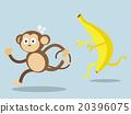 monkey run away from big banana 20396075