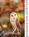 owl, bird, birds 20397334