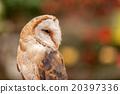 owl, bird, birds 20397336