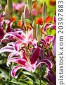 花朵 花卉 花 20397883