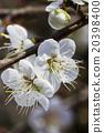 花朵 花 花卉 20398400