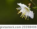花朵 花卉 花 20398406