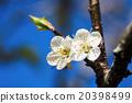 花朵 花 花卉 20398499