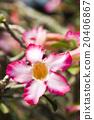 花朵 花卉 花 20406867