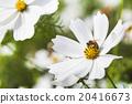 花朵 花卉 花瓣 20416673