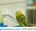 green bird 20419079