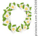 chamomile, frame, round 20426369