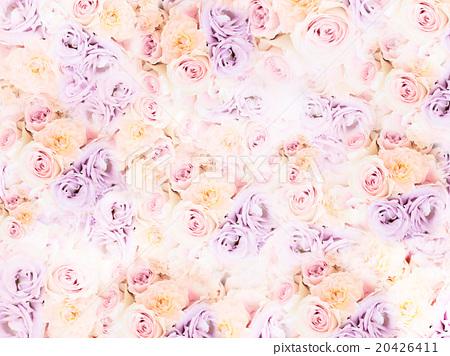 玫瑰 玫瑰花 花朵 20426411