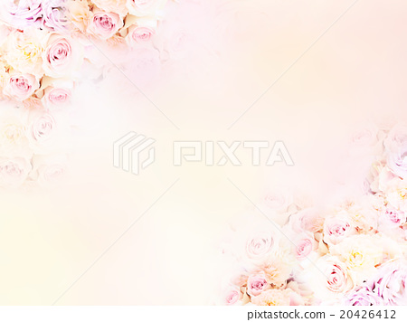 玫瑰 玫瑰花 花朵 20426412