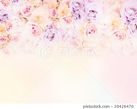 玫瑰 玫瑰花 花朵 20426470