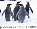 王企鵝走 20428090