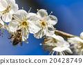 花朵 花 花卉 20428749