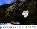 花朵 花 花卉 20428750